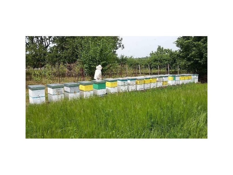 Подститацајна средства и за пчеларе
