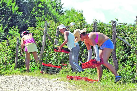 Сезонски радници у пољопривреди могу очекивати пензијско и здравствено осигурање