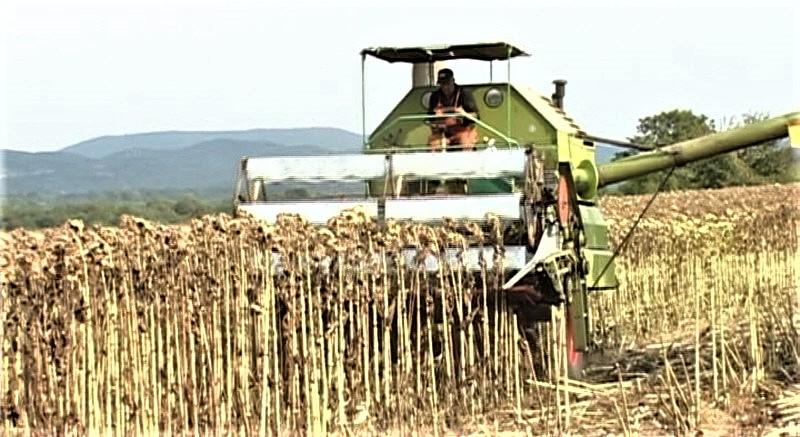 Zoran Jovanović iz Rabrova ostvario rekordni prinos od 4,3 tone suncokreta po hektaru