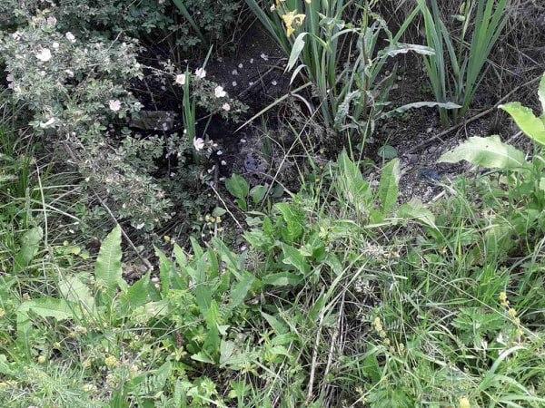 Успешно спроведена дводневна акција сузбијања ларви комараца