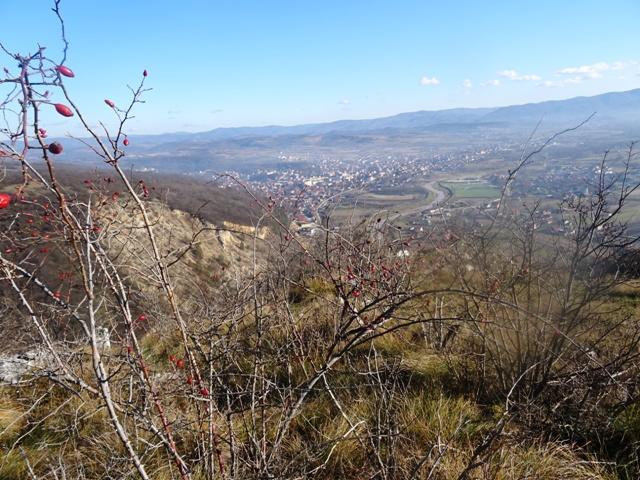 Завод за јавно здравље Пожаревац  : у Браничевском округу у протеклих 48 часова 59 новозаражених